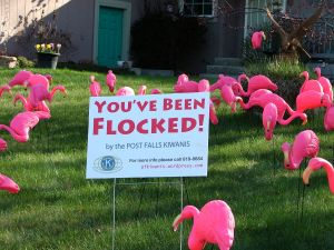 flocked Thoreson 2